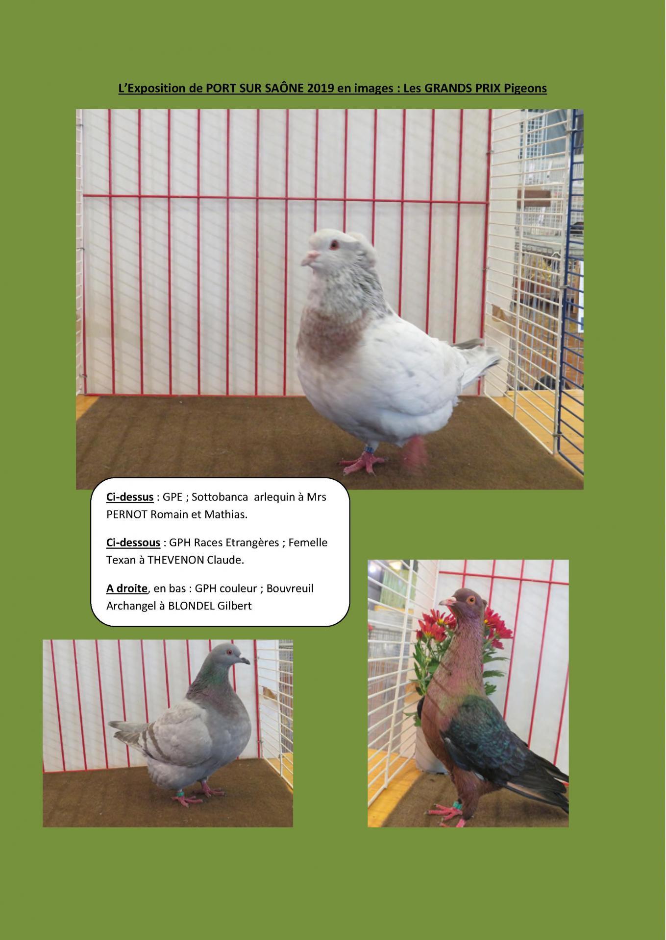 Port sur saone 2019 en images les grands prix pigeons 1