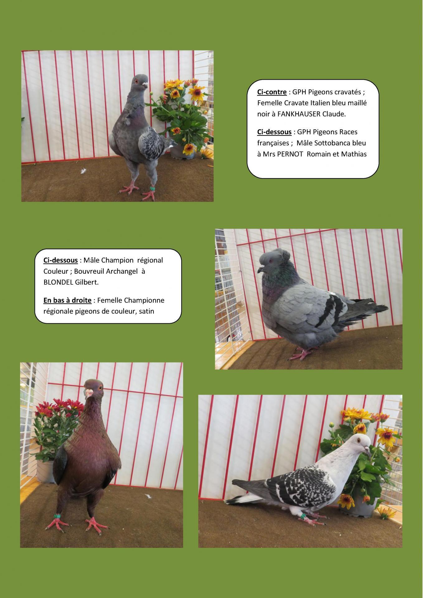 Port sur saone 2019 en images les grands prix pigeons 2